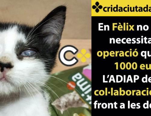 L'ADIAP demana col·laboració ciutadana per costejar la operació d'un gatet