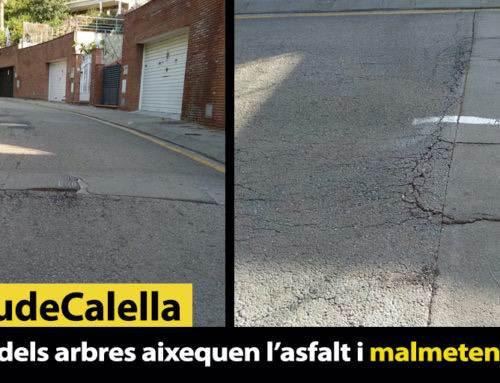 Les arrels dels arbres aixequen l'asfalt i malmeten els cotxes
