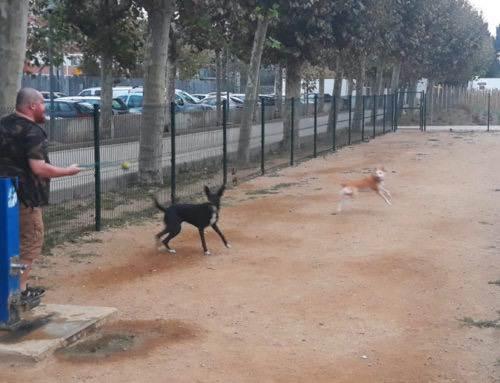 Un brot de parvovirosi posa en alerta als propietaris de gossos de Calella