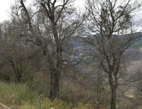 Els veïns de Can Carreres temen els incendis forestals