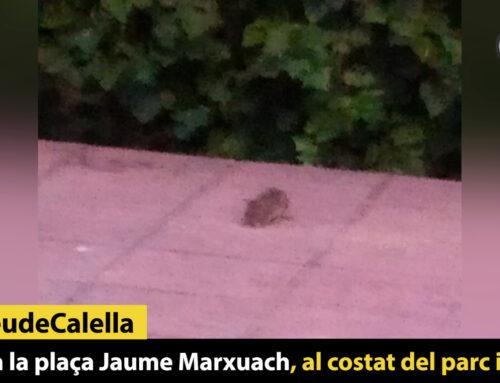 Rates a la plaça Jaume Marxuach, al costat del parc infantil