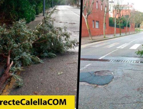 El temporal Filomena fa caure dos arbres