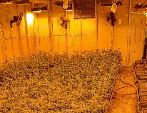 Desmantellada una plantació amb mil plantes de marihuana al polígon industrial de Poblenou